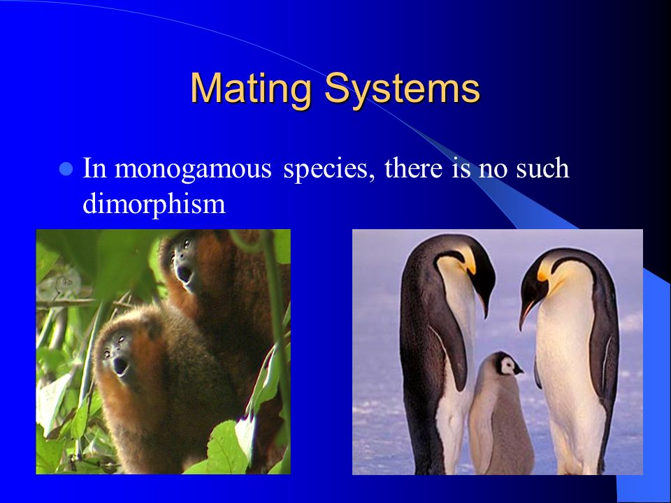 Mating Systems In monogamous species, there is no such dimorphism