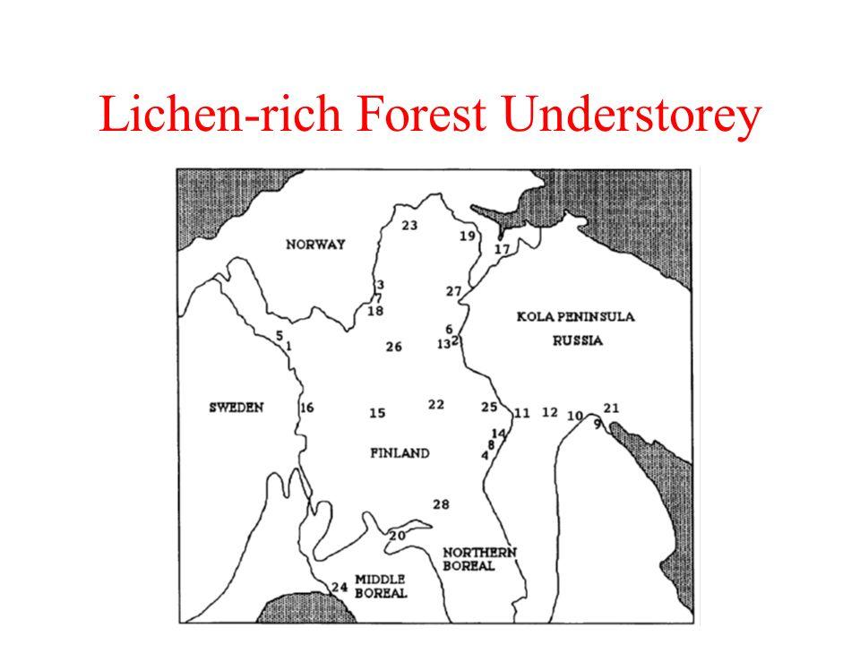Lichen-rich Forest Understorey