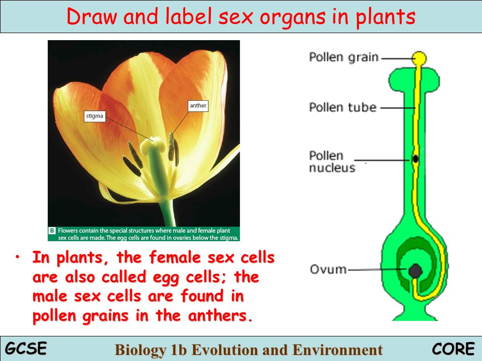 farrewil-male-sex-cells-are-called-nude-women-boxing