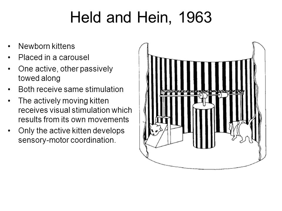 Held and Hein, 1963 Newborn kittens Placed in a carousel
