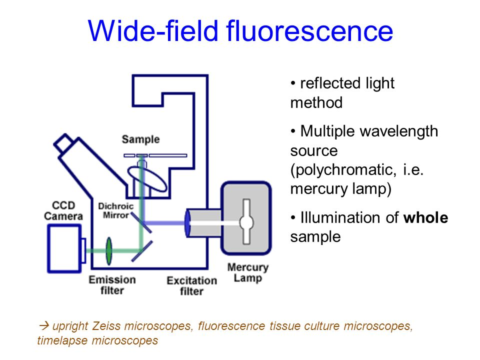 Wide-field fluorescence