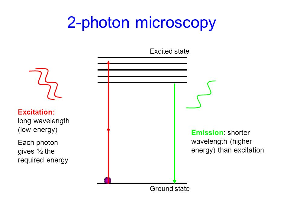 2-photon microscopy Excitation: long wavelength (low energy)