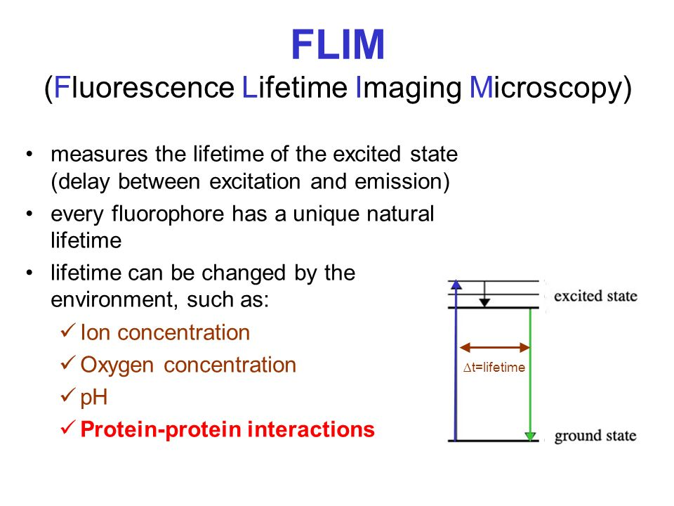 FLIM (Fluorescence Lifetime Imaging Microscopy)