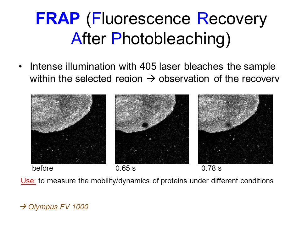 Part 1: The root of all evil Part 2: Fluorescence ...