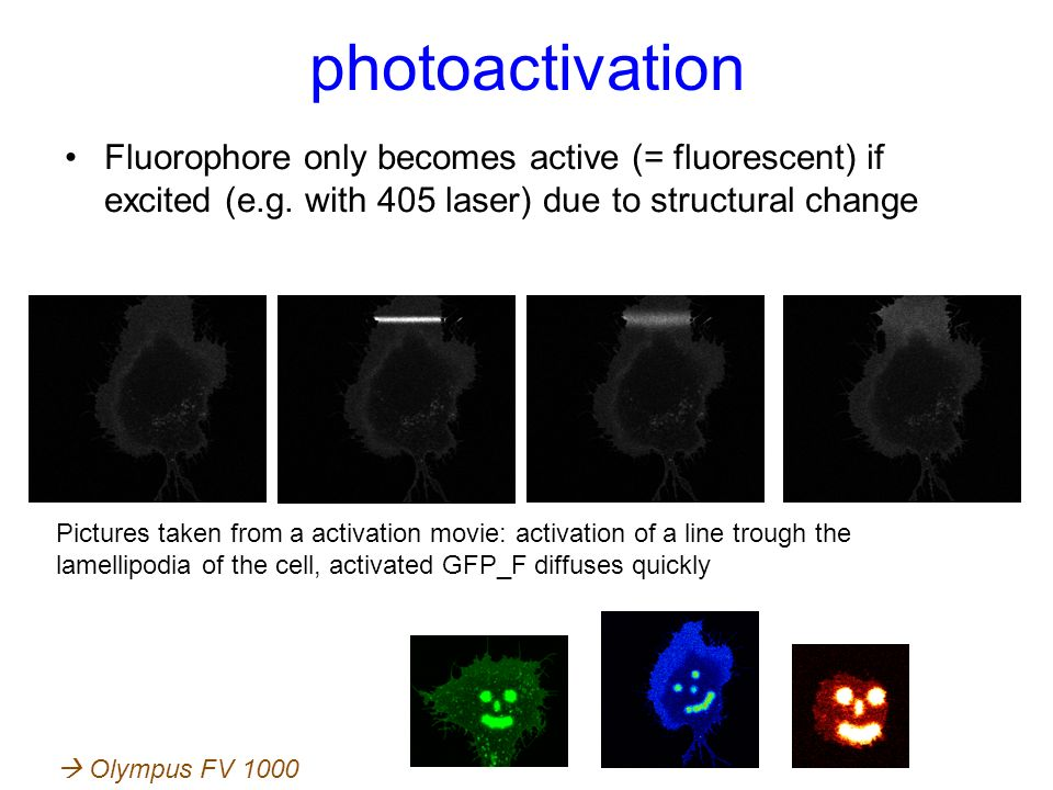 photoactivation Fluorophore only becomes active (= fluorescent) if excited (e.g. with 405 laser) due to structural change.