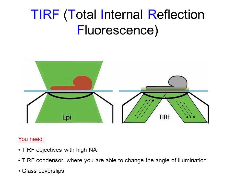 TIRF (Total Internal Reflection Fluorescence)