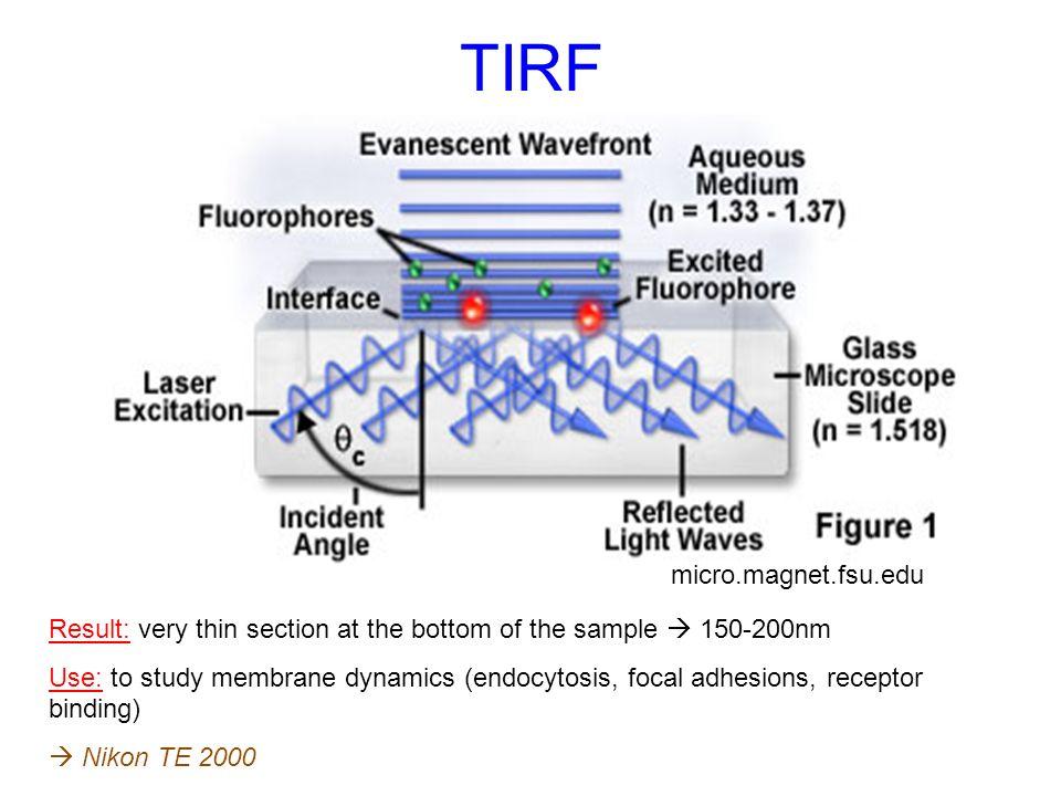TIRF micro.magnet.fsu.edu