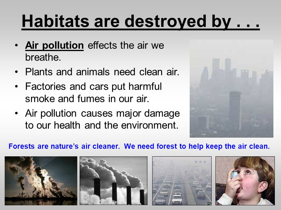an analysis of air pollution effects on human plants and also the environment Pollution effects on humans, animals, plants and the environment i effects of air pollution ozone can also decay plant cells directly by entering stomata.