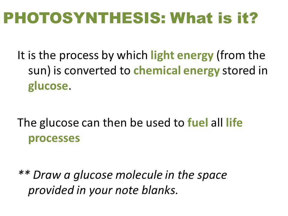 PHOTOSYNTHESIS: What is it