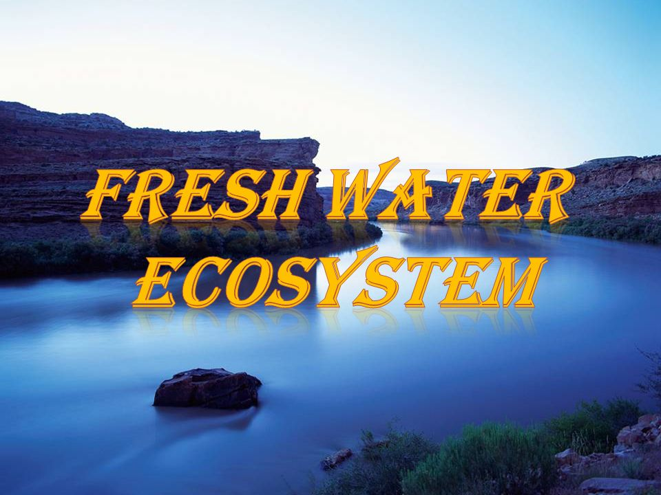 fresh water ecosystem Aquatic ecosystems chapter 7 water biomes types of organisms present depends on salinity divided into freshwater and marine freshwater includes lakes.
