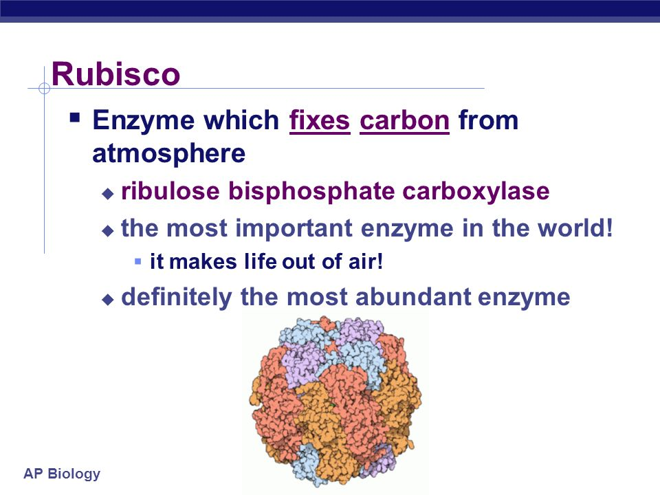 Rubisco Enzyme which fixes carbon from atmosphere