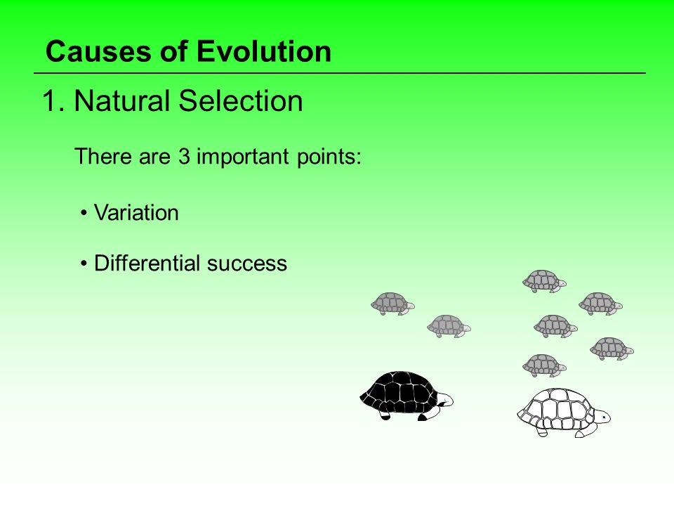 Causes of Evolution 1. Natural Selection There are 3 important points: