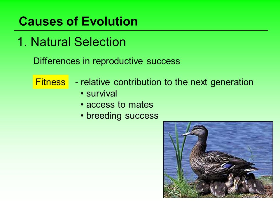 Causes of Evolution 1. Natural Selection