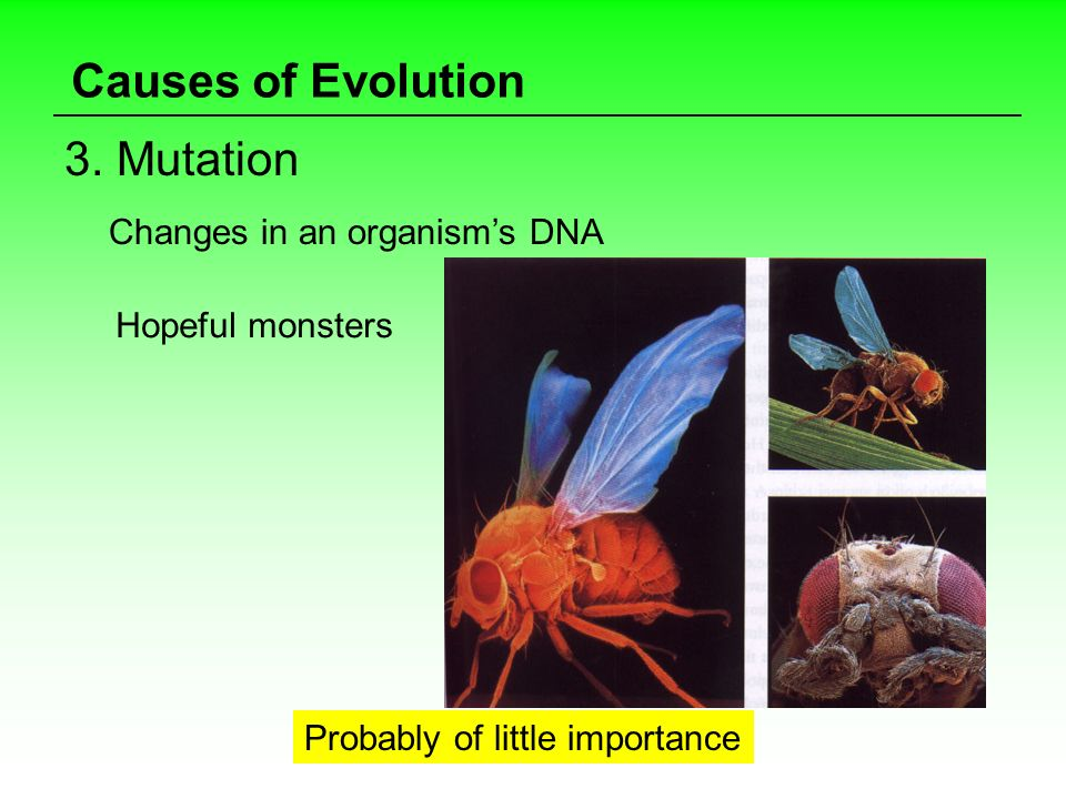 Causes of Evolution 3. Mutation Changes in an organism's DNA