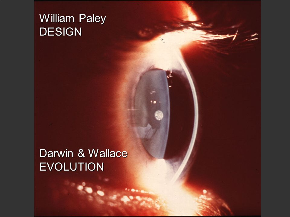 William Paley DESIGN Darwin & Wallace EVOLUTION