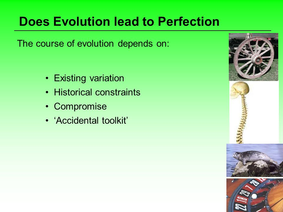 Does Evolution lead to Perfection