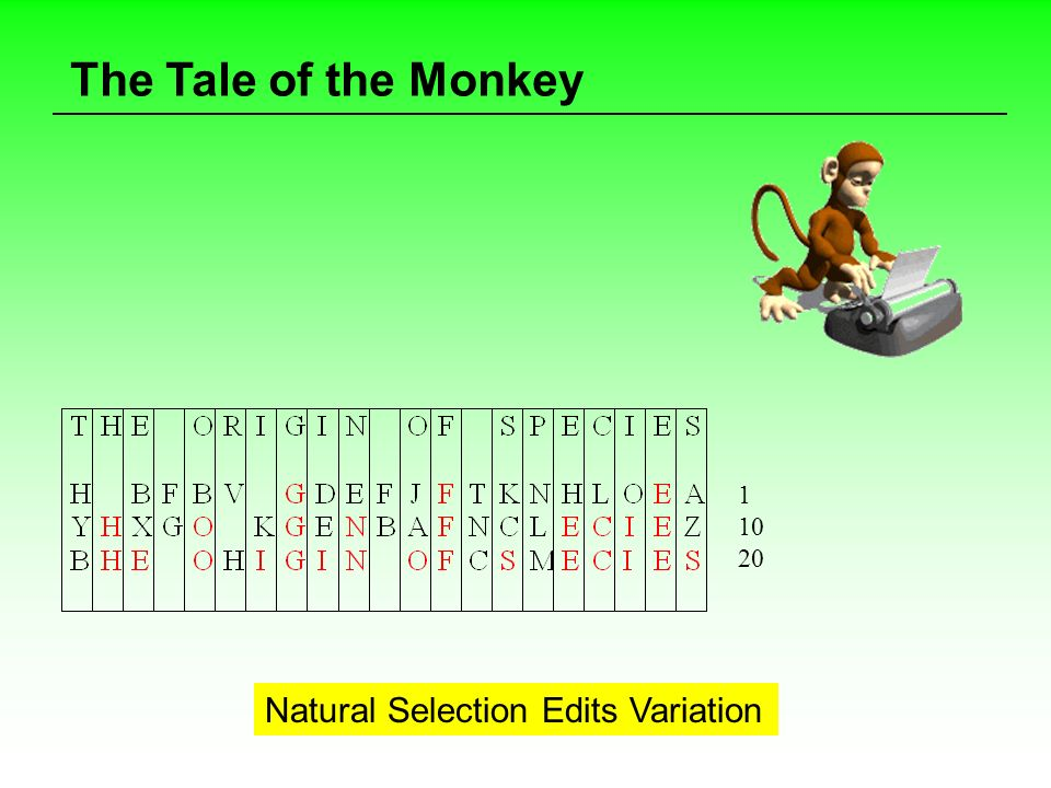 The Tale of the Monkey 1 10 20 Natural Selection Edits Variation