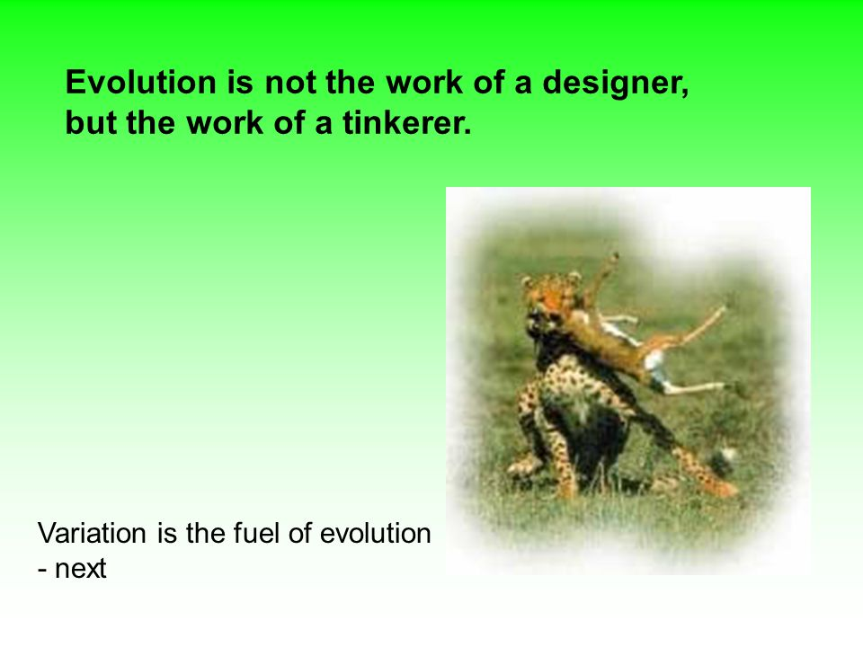 Evolution is not the work of a designer, but the work of a tinkerer.