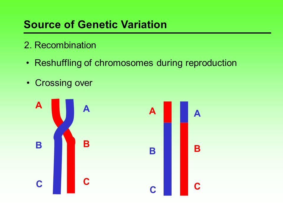Source of Genetic Variation