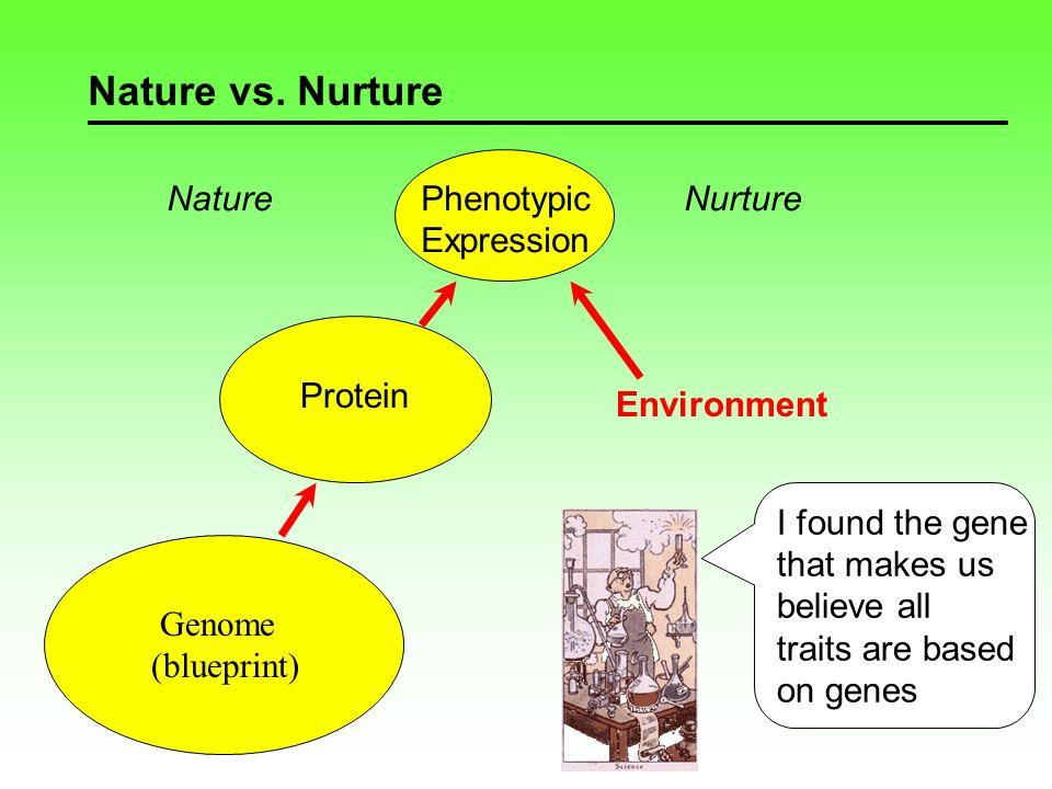 Nature vs. Nurture Genome (blueprint) Nature Phenotypic Expression