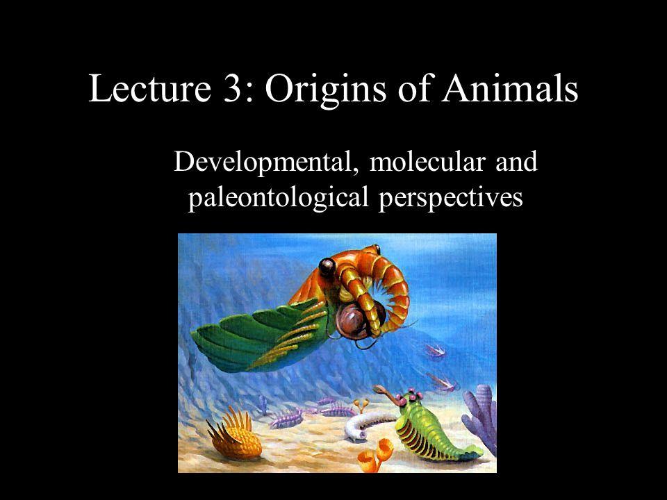 Lecture 3: Origins of Animals