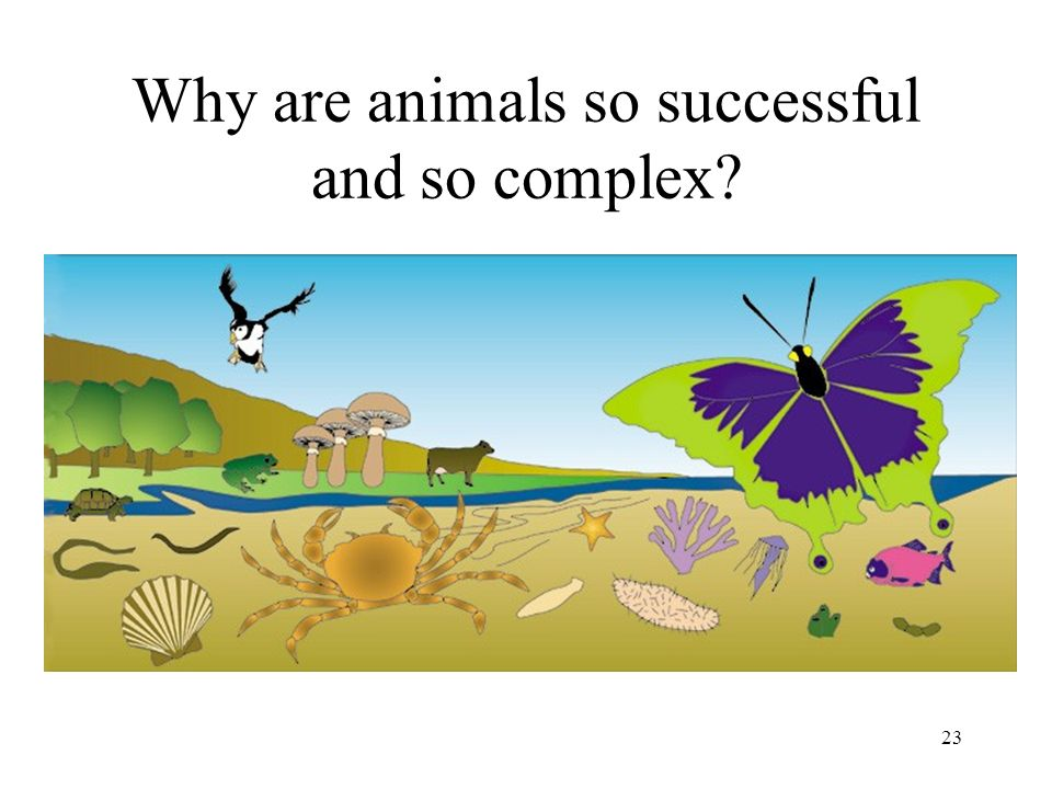 Why are animals so successful and so complex