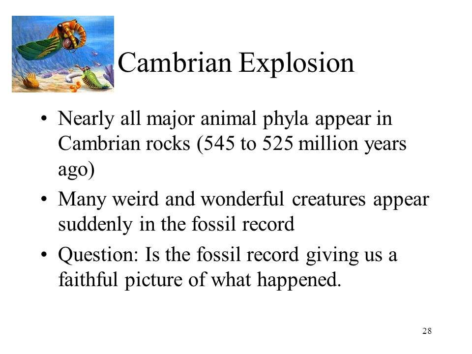 Cambrian Explosion Nearly all major animal phyla appear in Cambrian rocks (545 to 525 million years ago)