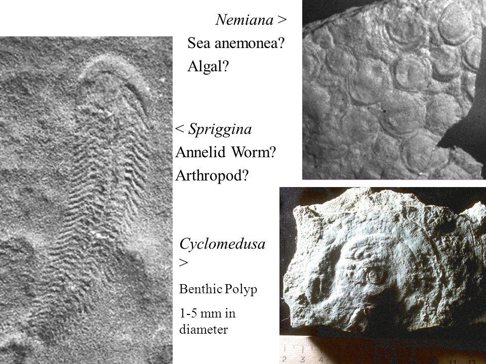 Nemiana > Sea anemonea Algal < Spriggina Annelid Worm