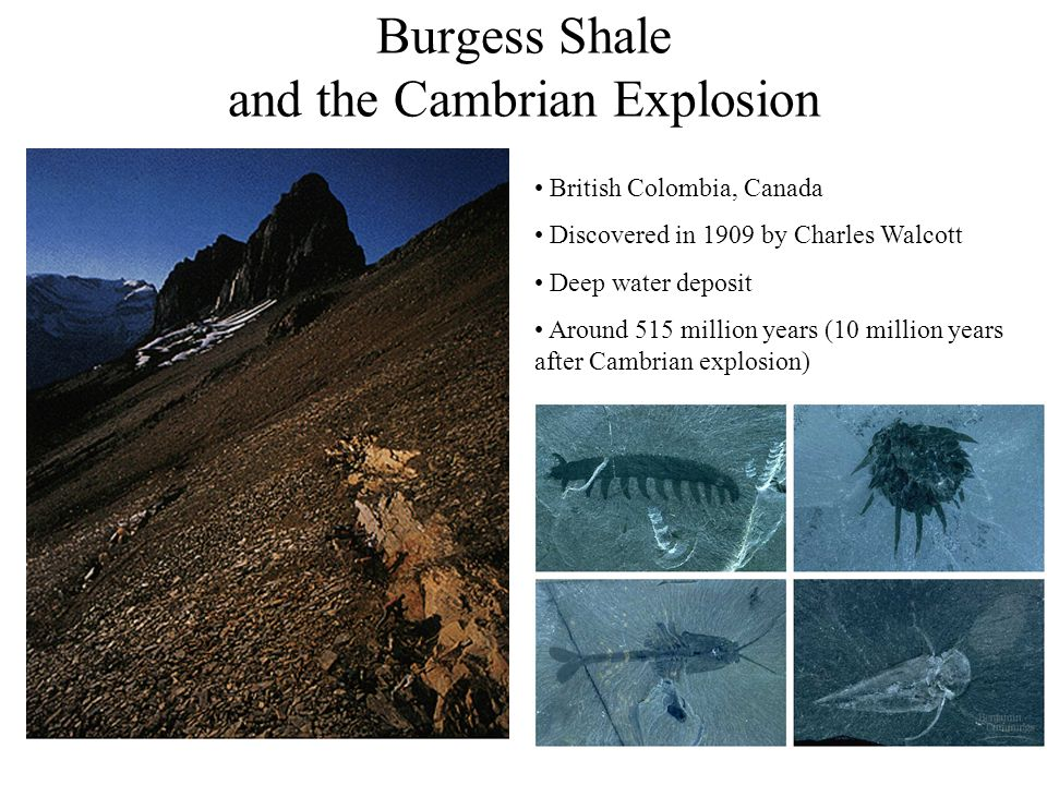 Burgess Shale and the Cambrian Explosion