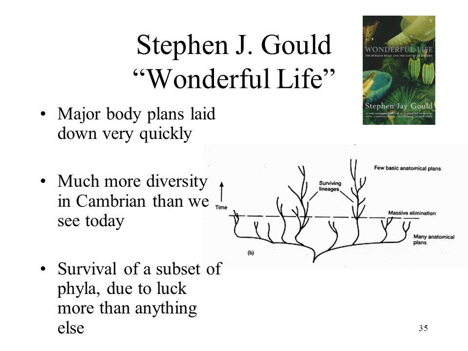 Stephen J. Gould Wonderful Life