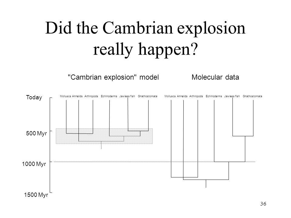 Did the Cambrian explosion really happen