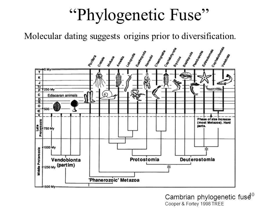 Phylogenetic Fuse Molecular dating suggests origins prior to diversification. Keep in mind serious concerns about molecular dating.