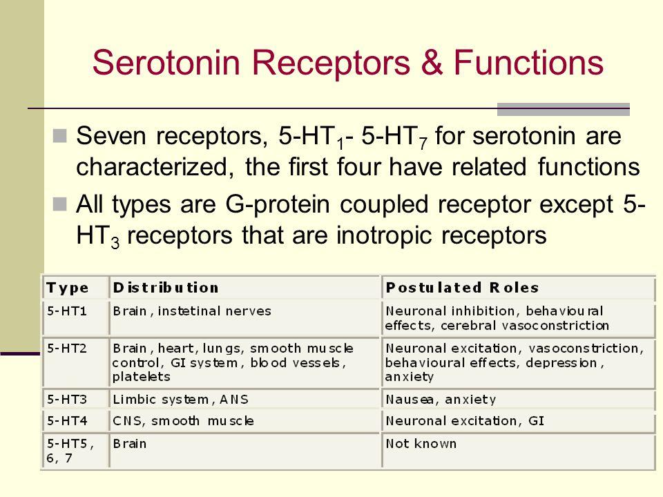 action serotonin functions Serotonin also has some cognitive functions a serotonin receptor antagonist is a type of receptor drug that inhibits action at serotonin receptors.
