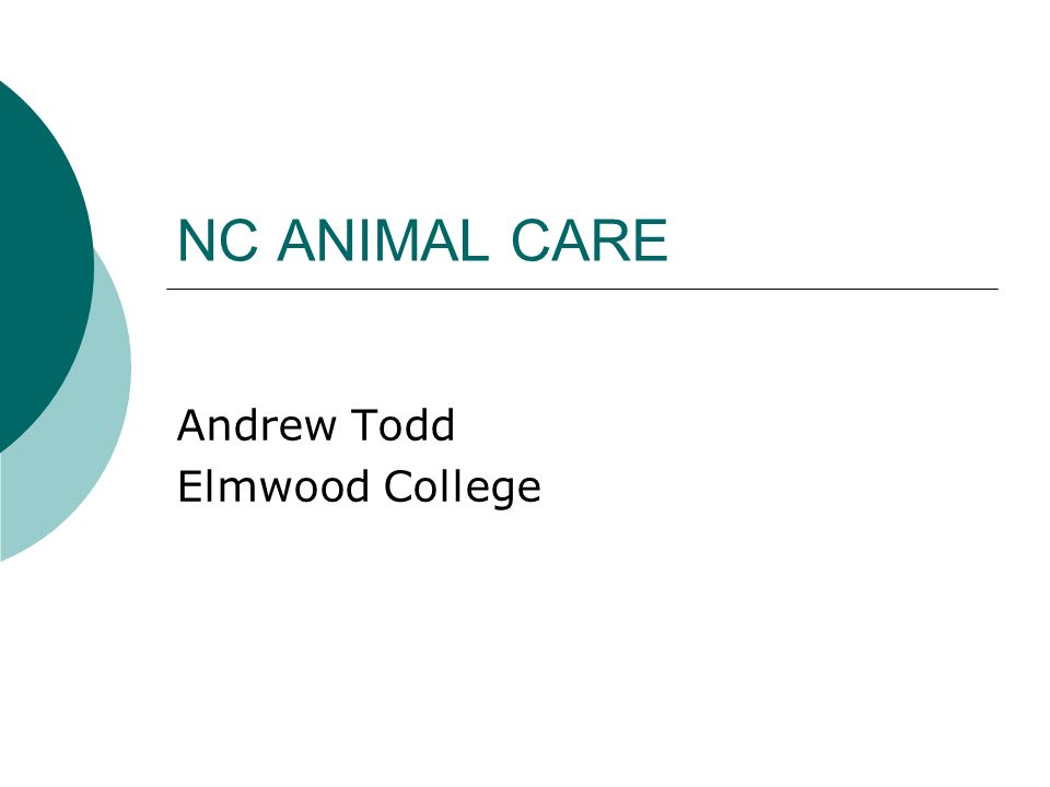Andrew Todd Elmwood College