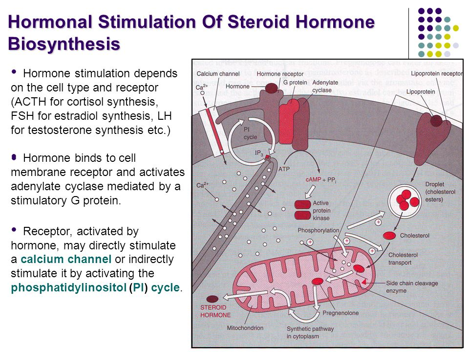 Steroid Hormones. - ppt download