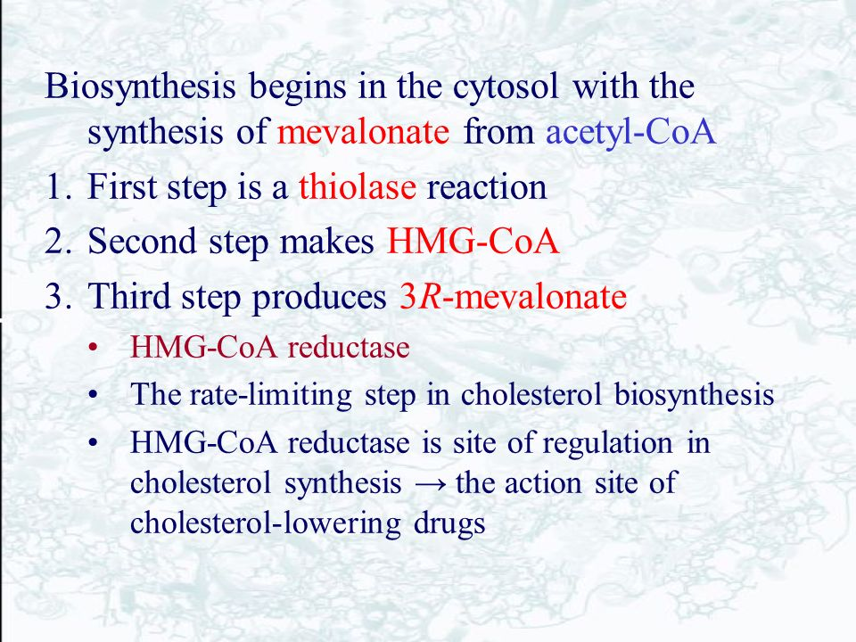 acetyl coa steroid synthesis