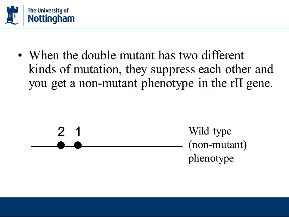 When the double mutant has two different kinds of mutation, they suppress each other and you get a non-mutant phenotype in the rII gene.
