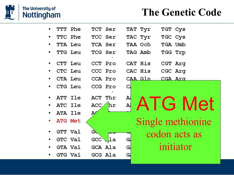 ATG Met The Genetic Code Single methionine codon acts as initiator