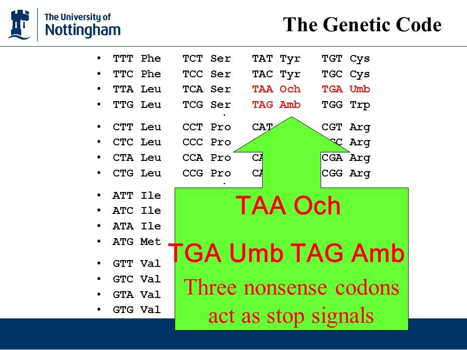 TAA Och TGA Umb TAG Amb Three nonsense codons act as stop signals