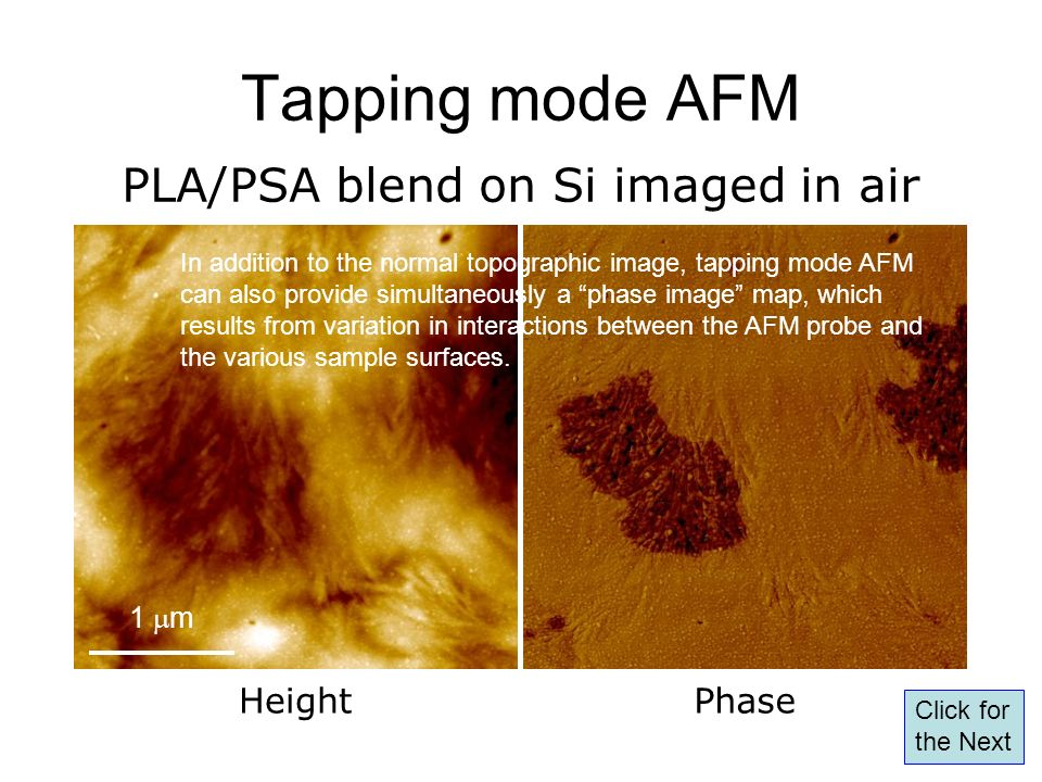 Tapping mode AFM PLA/PSA blend on Si imaged in air Height Phase 1 mm