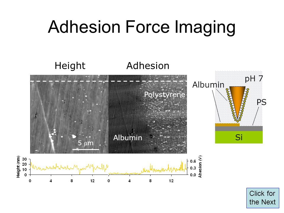 Adhesion Force Imaging