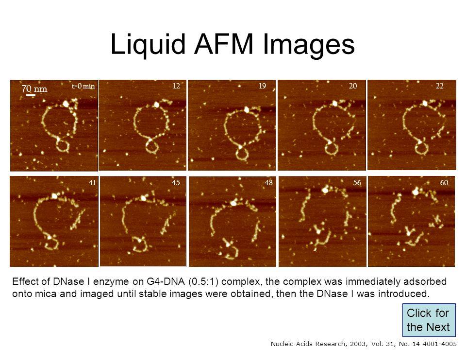 Liquid AFM Images Click for the Next 70 nm