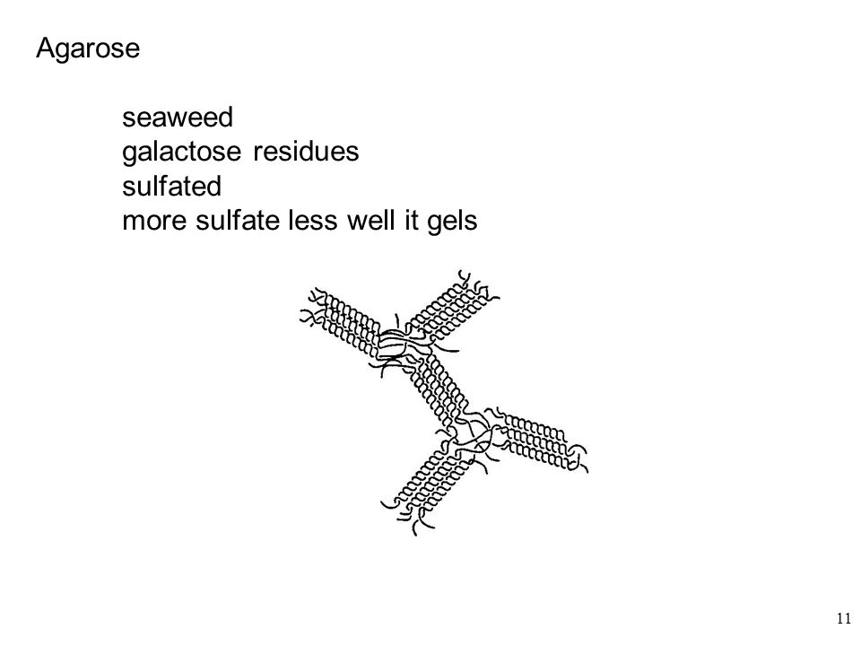 Agarose seaweed galactose residues sulfated more sulfate less well it gels