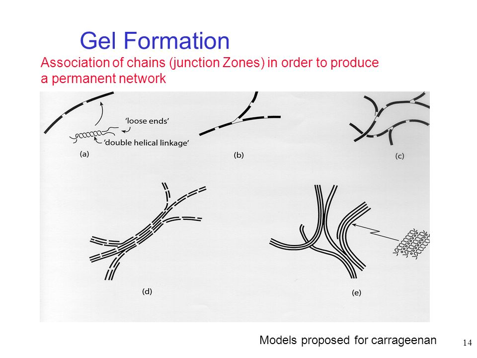 Gel Formation Association of chains (junction Zones) in order to produce a permanent network. Diverse models for gel formation:
