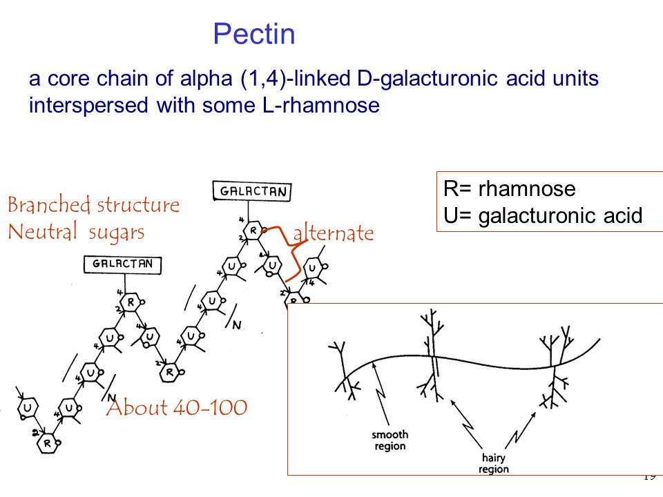 Pectin a core chain of alpha (1,4)-linked D-galacturonic acid units interspersed with some L-rhamnose.