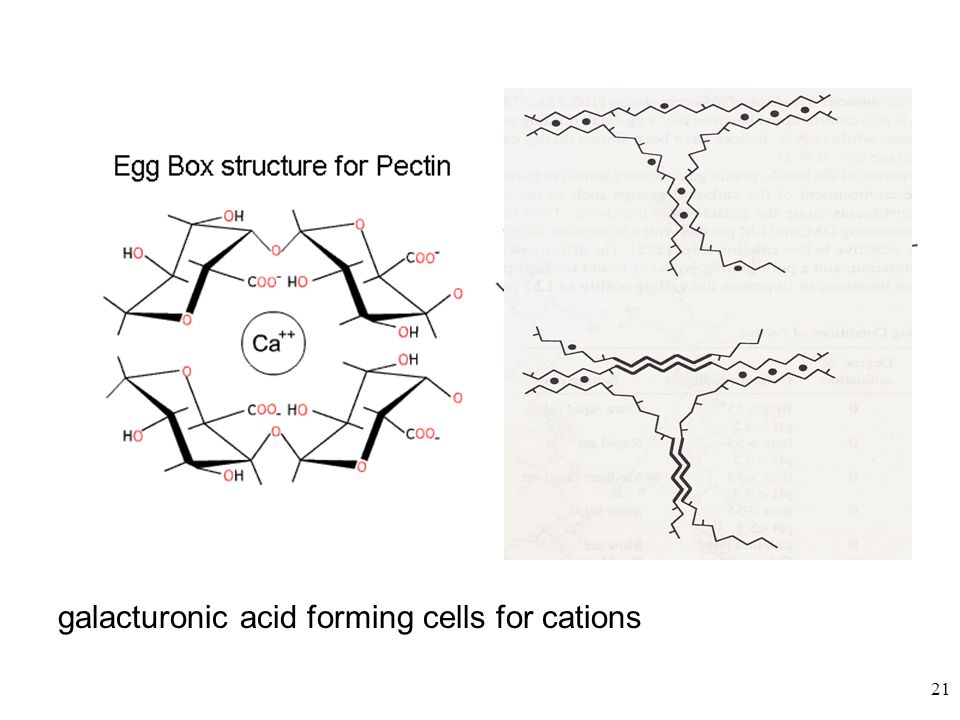 galacturonic acid forming cells for cations