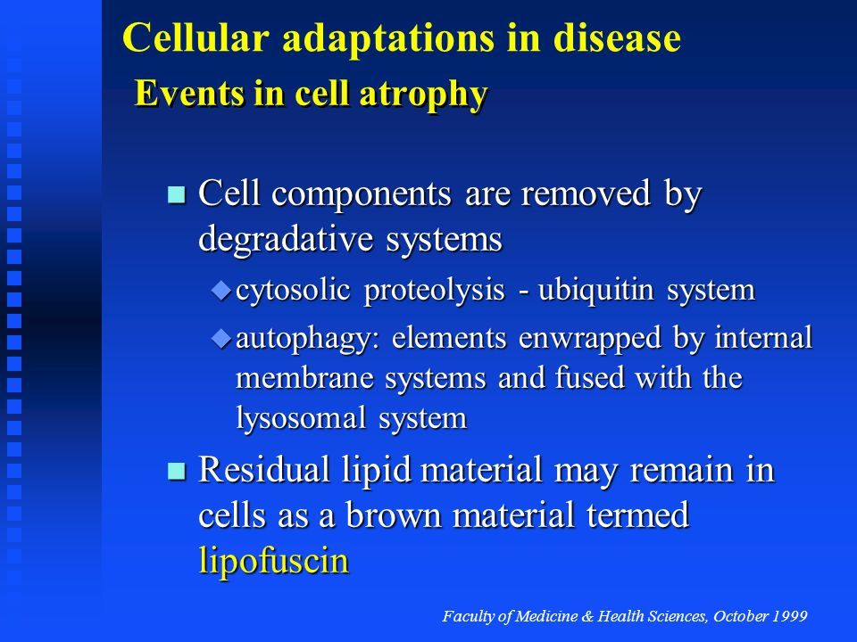 Cell components are removed by degradative systems