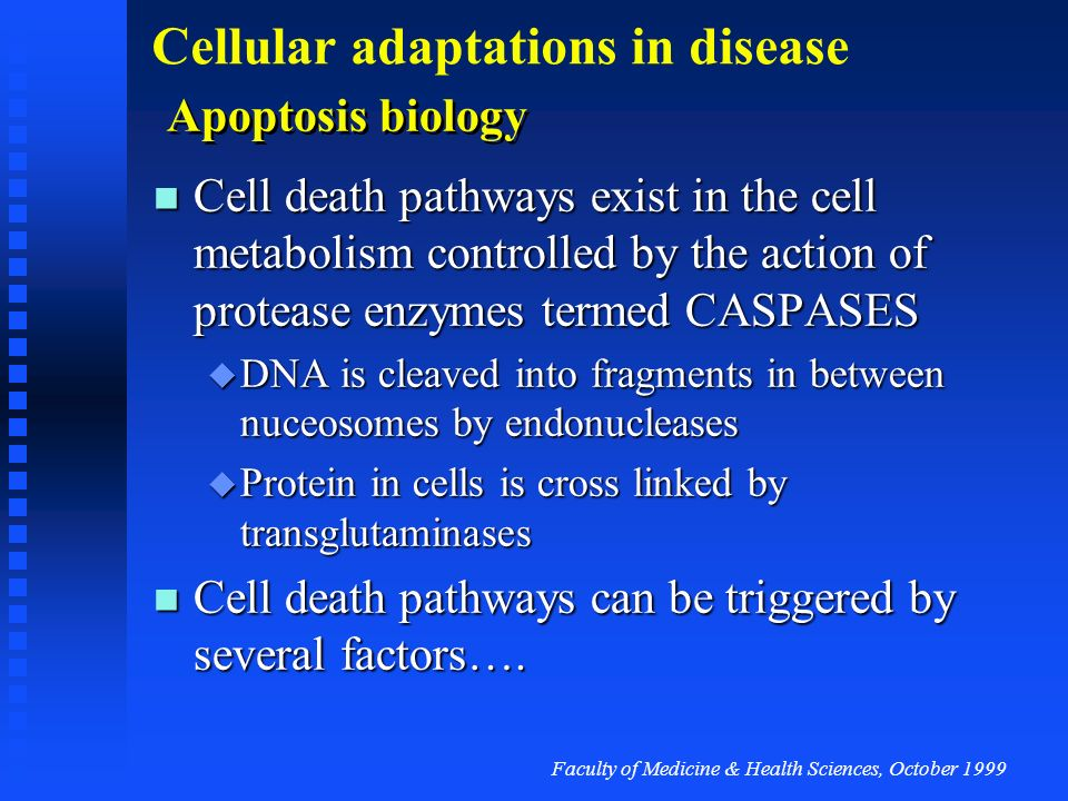 Cell death pathways can be triggered by several factors….