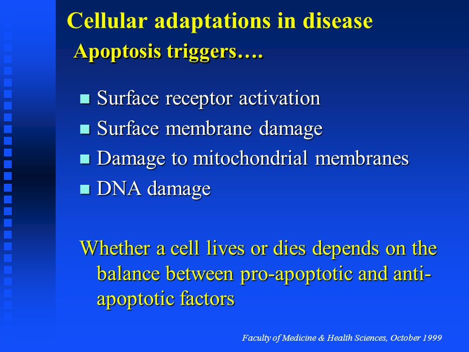Apoptosis triggers…. Surface receptor activation. Surface membrane damage. Damage to mitochondrial membranes.