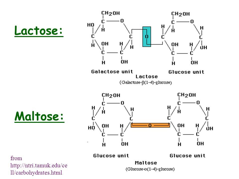 Lactose: Maltose: from http://ntri.tamuk.edu/cell/carbohydrates.html